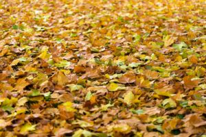 How Fallen Leaves Affect Your HVAC